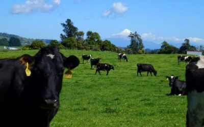 The Climate Change Commission Draft Advice for Consultation – An Agriculture Impact Summary